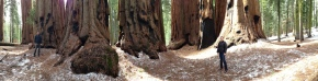 Cap-and-trade Among theRedwoods