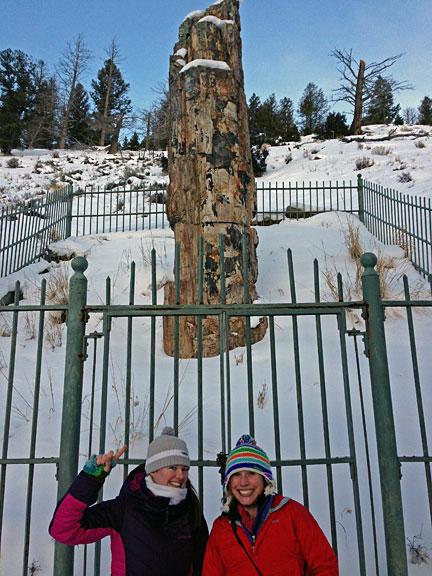 Megan and I pose by this fossilized redwood in Yellowstone.