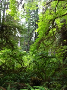 A world of green at Jedediah Smith Redwoods State Park.