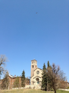 A hungry osprey glides over St. Catherine University in MN.