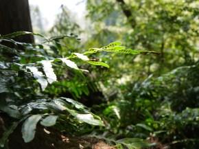 Treetop Ferns