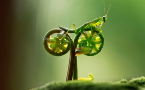 Fern Bicycle
