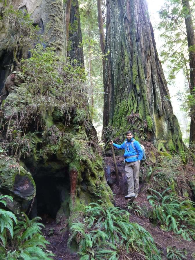 My colleague, Professor Eddie Watkins, takes a break from searching for gametophytes along the James Irvine Trail at Prairie Creek Redwoods State Park.