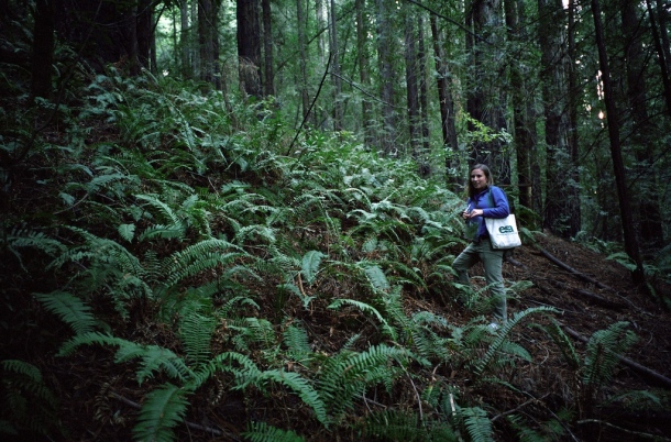 Collecting fern data in 2008 at Roy's Redwoods. Photo by Mike Limm.