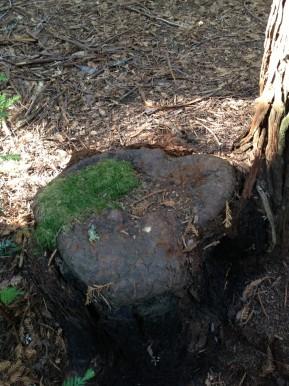 How Redwoods Heal