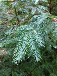 Conservation: Botanical GardenStyle