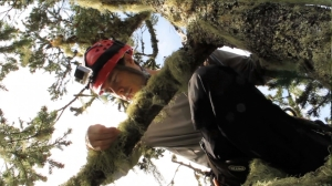 Cameron Williams examines the many lichen covering a branch in the 70m Douglas fir. Photo by Rikke Reese Næsborg.
