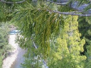 Treetop Drought