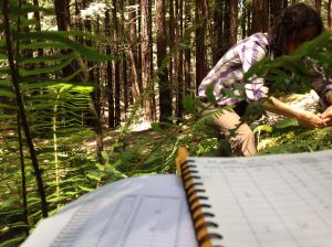 Our outdoor office view when tracking climate change impacts on coast redwood forest ferns for Fern Watch.