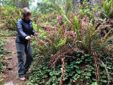 Dr. Fern encourages this crunchy sword fern to hang in there a little longer.