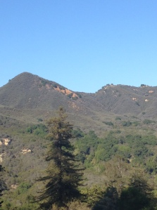 topanga redwood