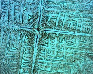 Crystalline salt pattern created by E. coli. Photo by J. M. Gómez-Gómez, courtesy of Science Daily.