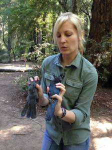 Researcher Elena West, explains how the juvenile Steller's jay (left) has grayer feathers relative to the adult jay (right).