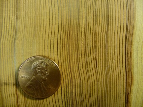 A giant step for understanding redwood tree rings
