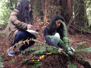 Oakland Tech high school students collect Fern Watch data at Redwood Regional Park.