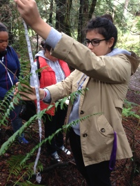 Frond height measurements by students at Redwood Regional Park.