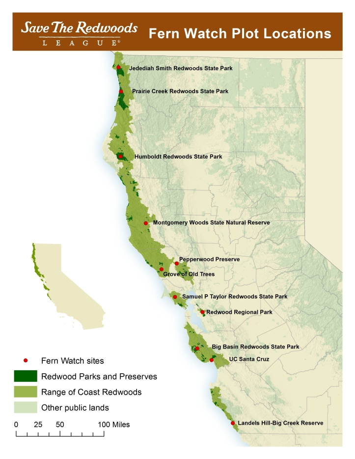 With help of volunteers, we track how climate shapes Western sword fern every year in these 11 forests.