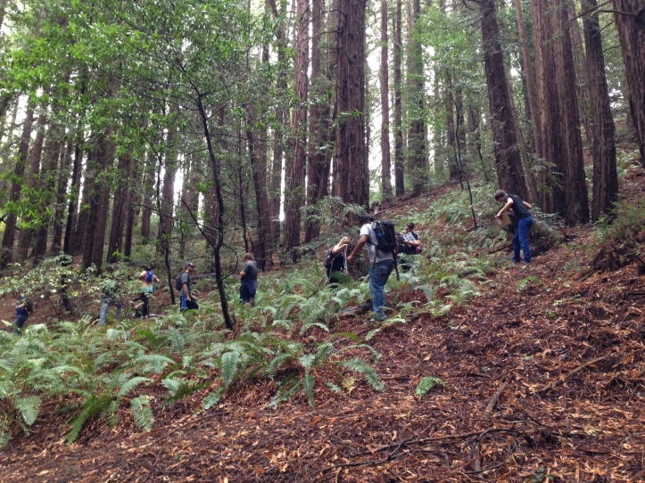 Las Positas Community College students get their fern on and collect Fern Watch data.