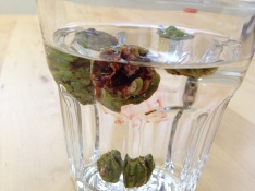 Tannins begin to dissolve as soon as the green redwood cones get wet.