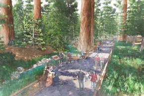 Restoring Mariposa Grove
