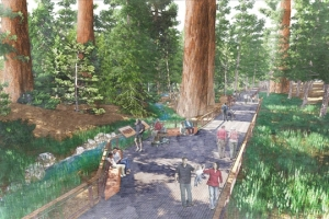 This drawing shows how the upgraded Mariposa Grove trails will protect sensitive giant sequoia habitat while still giving visitors the amazing views of the forest. Image courtesy of the Yosemite Conservancy.
