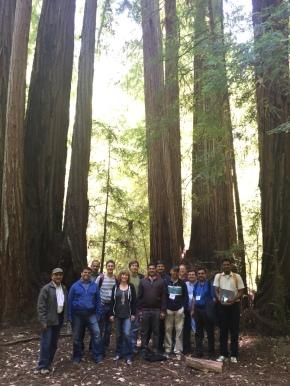 If Redwoods had Elephants…