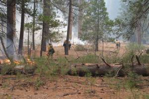 Prescribed fire at Yosemite National Park. Photo by the National Park Service.