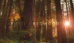 Behold Humboldt's Beauty