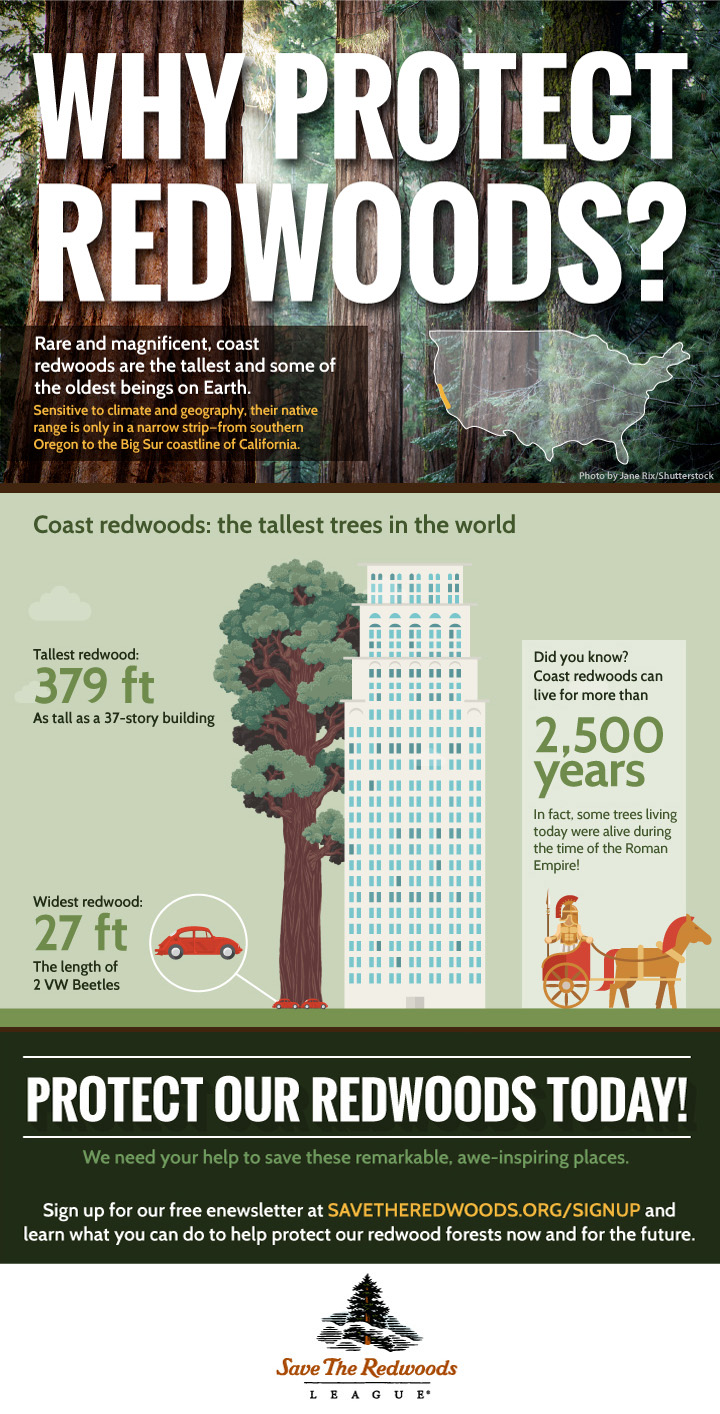redwoods-infographic-height-v2