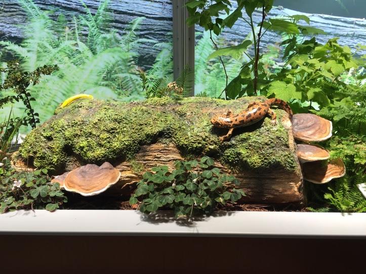 CAS log habitat